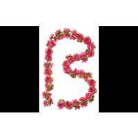 Bloemenstreng Basil Fuchsia