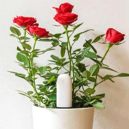 Xiaomi Xiaomi Vegtrug Flora Plant Sensor