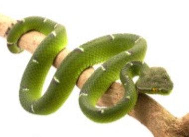 Cosmetica met Snake Venom