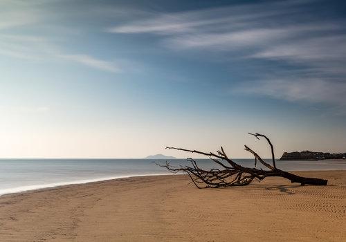 Sand & Driftwood
