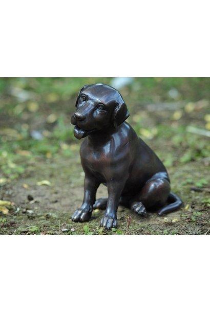 Kleiner Labrador