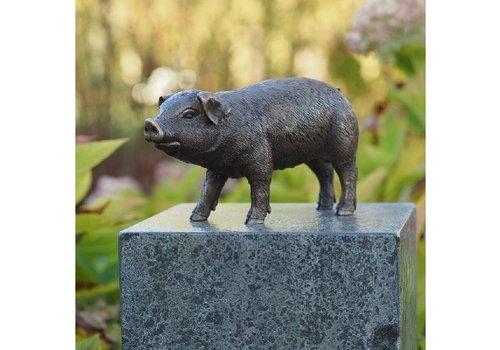 BronzArtes Bronzestatue: Schwein