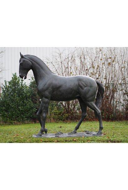 Groot paard