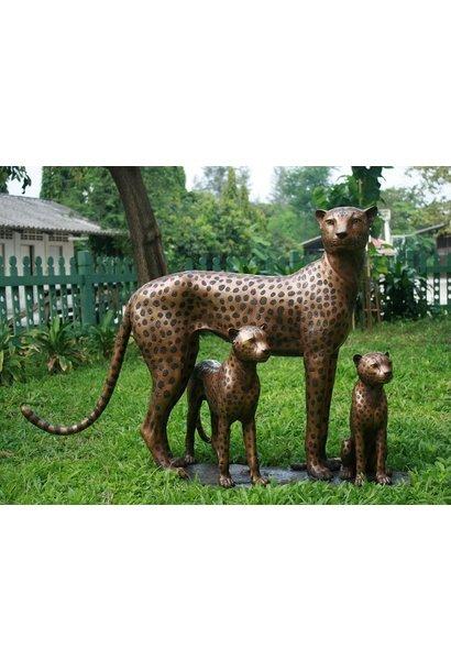 Familie Cheetah