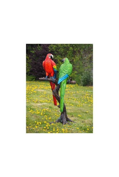 2 Coloured parrots on tree trunk