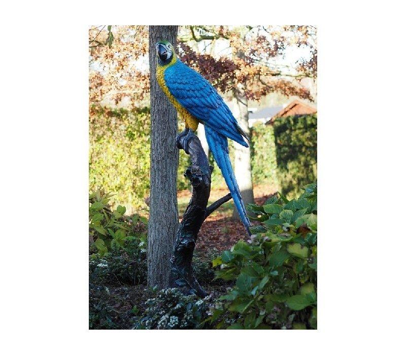 Gekleurde papegaai blauw