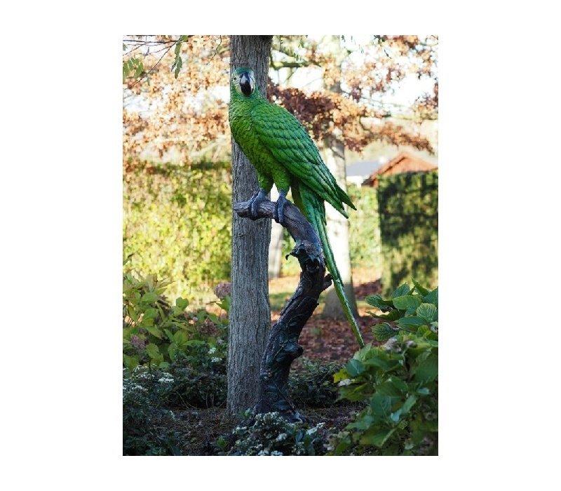 Coloured parrot blue