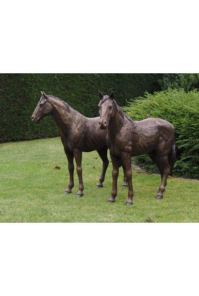 Koppel paarden