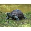 BronzArtes Turtle