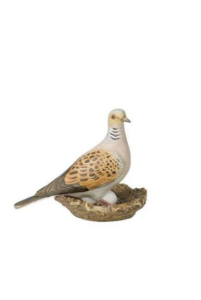 Bird of the Year 2020: Lovebird small