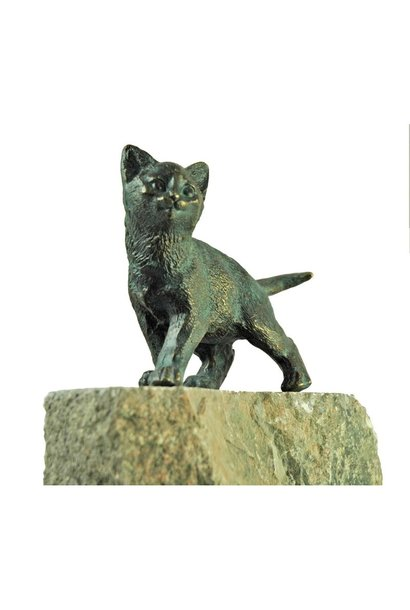 Young cat standing on granite