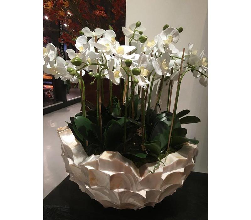 Schelpenvaas bowl - wit 60x33 cm met orchideeen