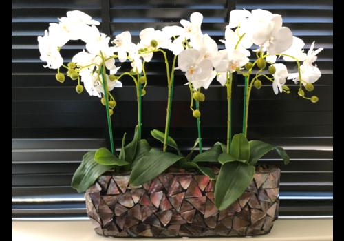 Schelpenvaas breed  met orchideëen- bruin 60 cm