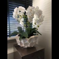 Schelpenvaas bowl - wit 40x24 cm met orchideeën - Eric Kuster stijl