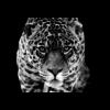 Aluminium Art - Jaguar