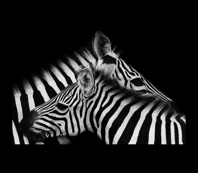 Aluminium Art - Zebra