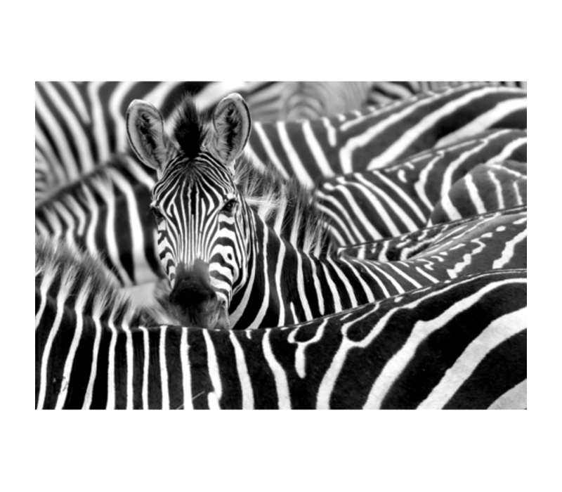 Aluminium Art - Zebra 's