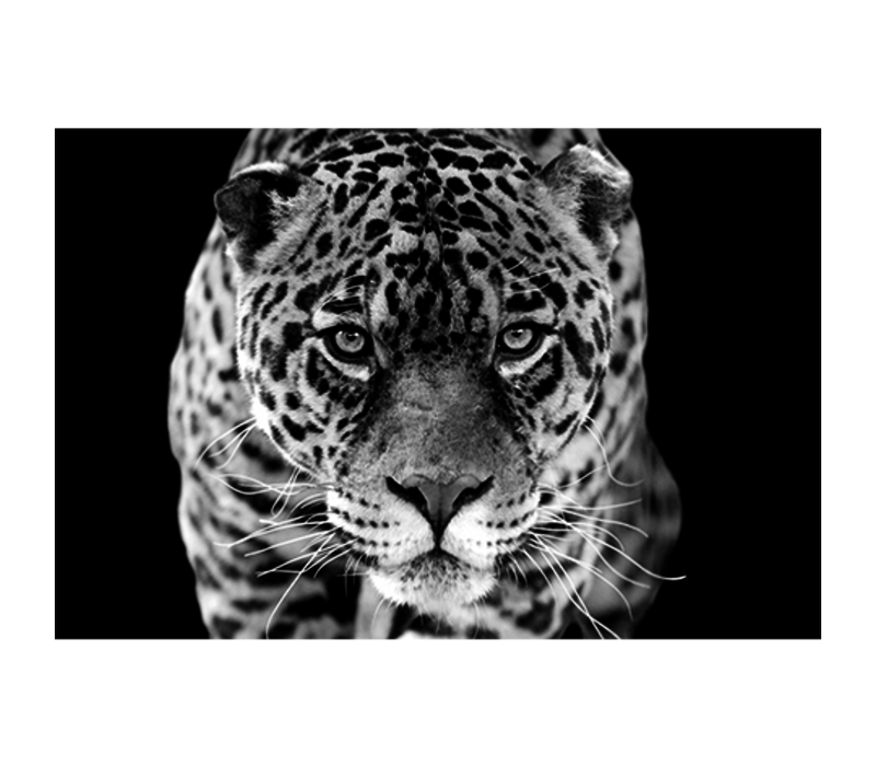 Aluminium Art - Jaguar Black and White