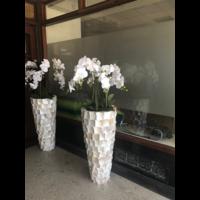 Schelpenvaas wit hoog 90 cm met orchideeën