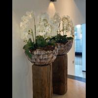 Schelpenvaas bowl - bruin 60x33 cm met orchideeën