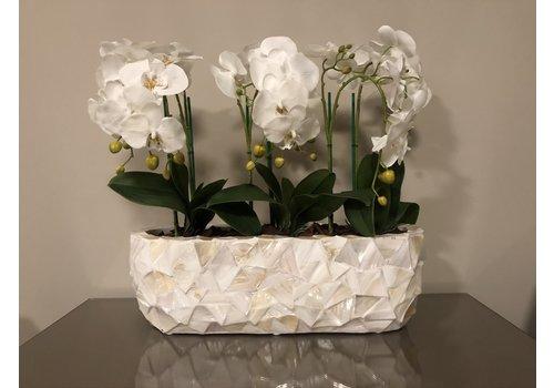 Schelpenvaas breed  met orchideëen- wit 60 cm