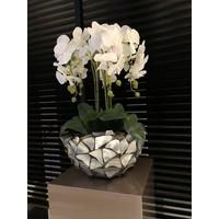 Schelpenvaas bowl - zilver 40x24 cm met orchideeën - Eric Kuster stijl