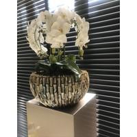 Schelpenvaas rough shell bowl - 40x20 cm met orchideeën