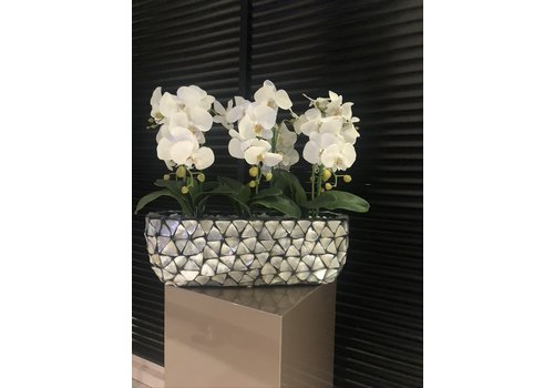 Domestica Interior Design Schelpenvaas breed  met orchideëen- zilver 60 cm