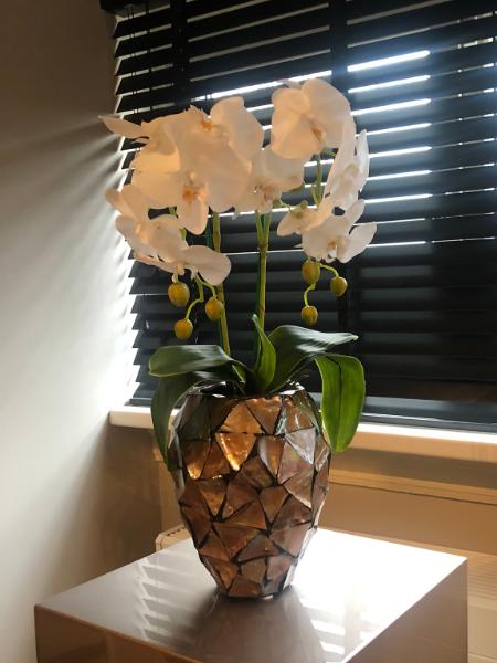 Schelpenvaas met witte orchidee