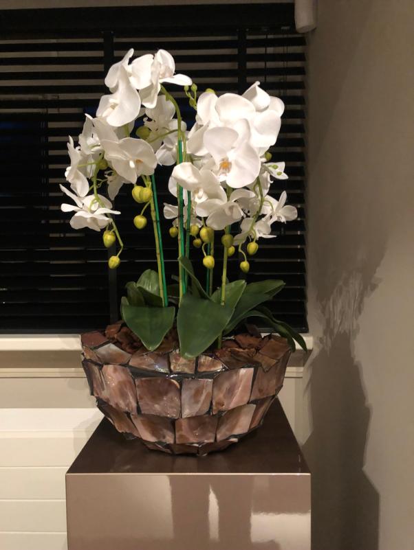 Schelpenvaas bowl met orchidee