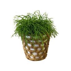 Geven is leuker Plantenpot met jute netje - per 6