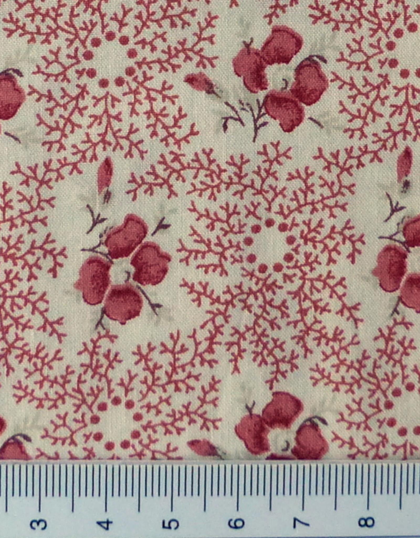 Diverse  10 cm Altrosa Blüten