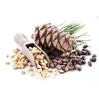 Pinienkerne Bio Premium Qualität 1Kg