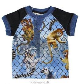 Molo Eton T-Shirt von Molo bei Pilzessin