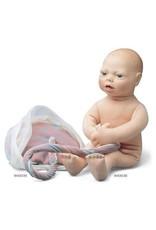 3B Scientific Fetusmodell (ohne Plazenta und Nabelschnur)