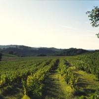De vergeten wijnstreek met fantastische authentieke druiven...