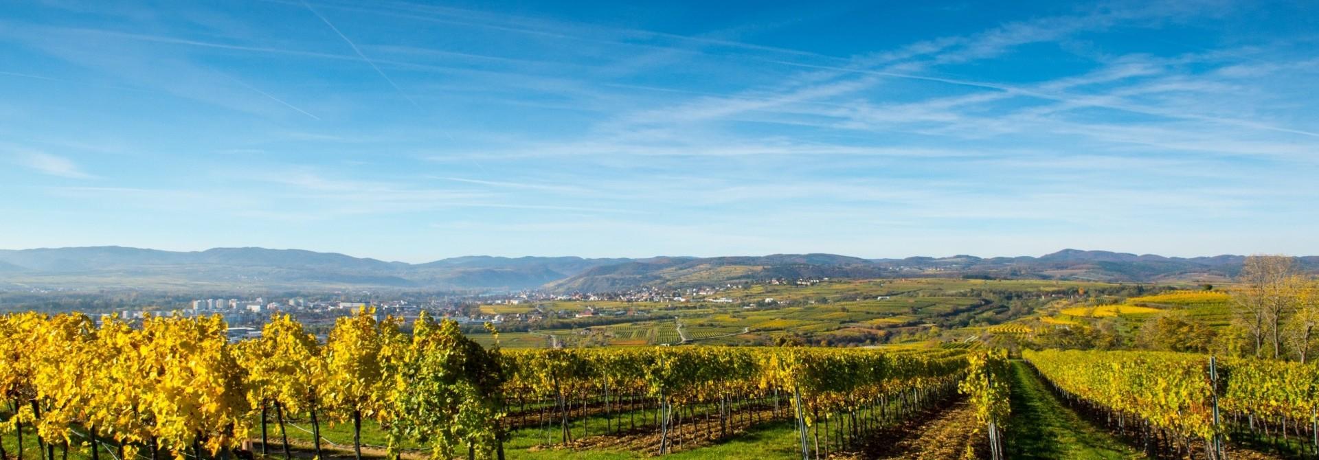 Wijnland Oostenrijk...