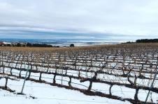 Las Margas wijngaard