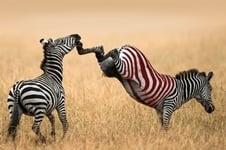 wijn zebra varken