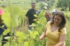 Balaran Aurelie vinoteca