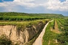 oostenrijkse wijnen kopen