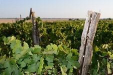 Italiaanse wijnen kopen