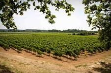 montenay - la vinoteca