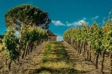 les marnieres - La Vinoteca