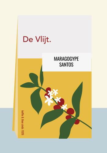 Maragogype - Santos