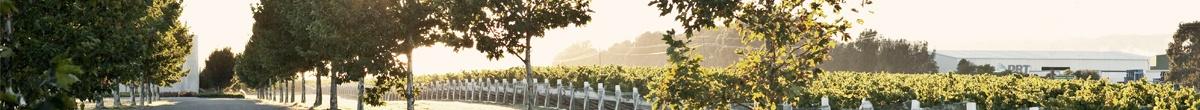 De prachtige wijngaard van Mount Riley