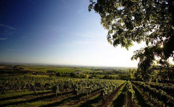 Oostenrijkse wijnen  - uitgelicht: Weingut Urbanihof