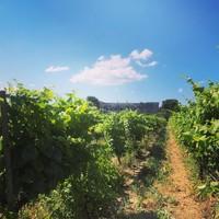 Primitivo, zwoele Italiaanse wijn