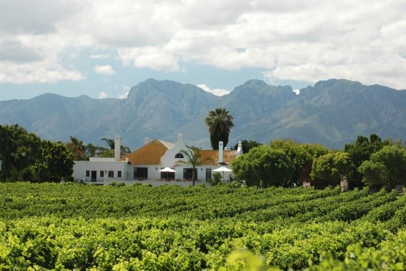 Waarom je Zuid-Afrikaanse wijnen echt eens moet proberen!