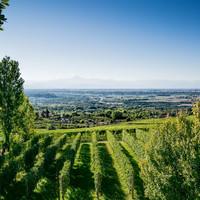 Piemonte, het gastronomisch paradijs met prachtige wijnen!